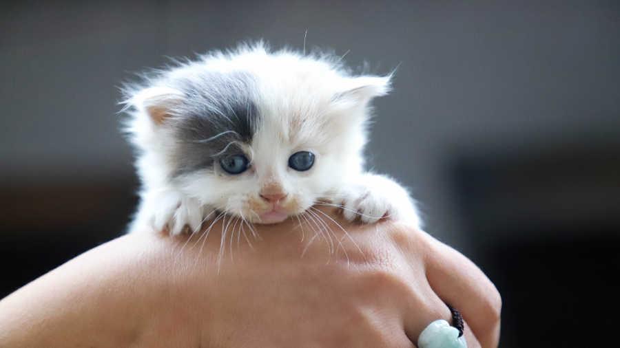 Happy Kittens